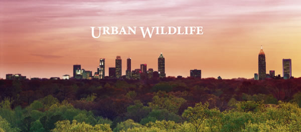 Click to read Atlanta's Urban Wildlife