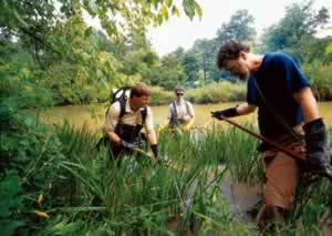 From left, Mike Spencer, John Biagi, and Wayne Starnes wade into the waters of the Chattahoochee Nature Center in search of the eel.Photo by Richard T. Bryant. Email richard_t_bryant@mindspring.com.