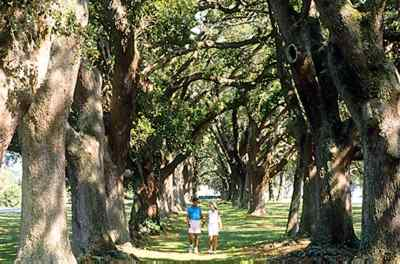 Retreat Plantation's majestic Avenue of Oaks.
