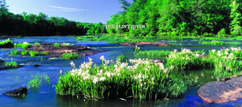 Click to read The Flint River
