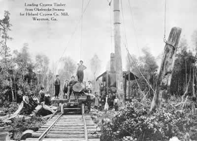 The logging operation of the Hebard Lumber Company in the Okefenokee Swamp.